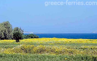 Mastichari Kos Dodecanese Greek Islands Greece